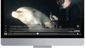 DolphinRescue